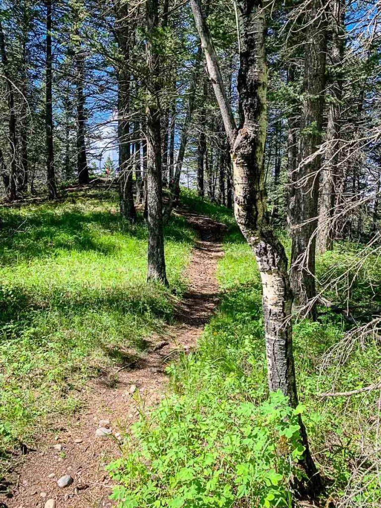 Montane Interpretive Trail - short hike in Kananaskis