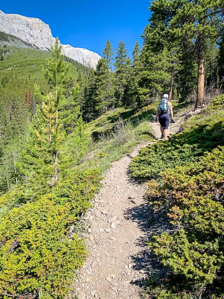 hiking to Aylmer Lookout - Banff hikes