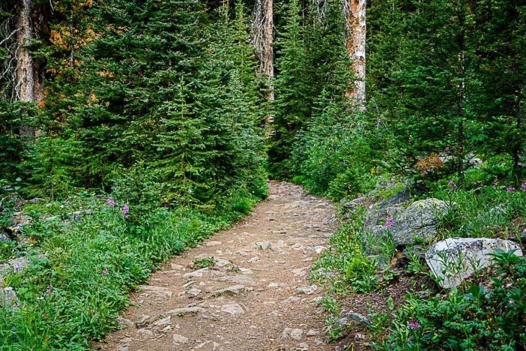 Banff Hikes - Boom Lake Hiking Trail