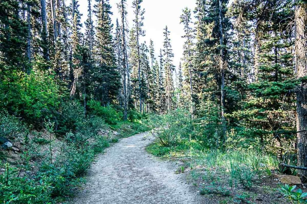 wide easy trail to Boom Lake