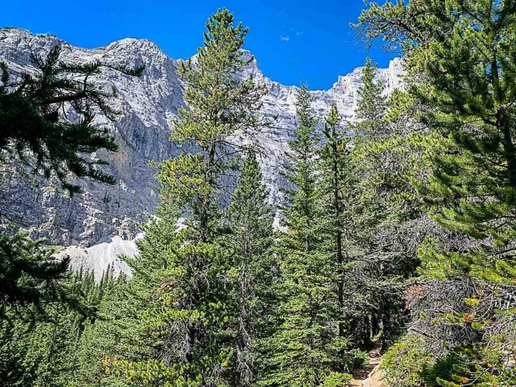 Views of Cascade Mountain Through the trees on C Level Cirque Hike