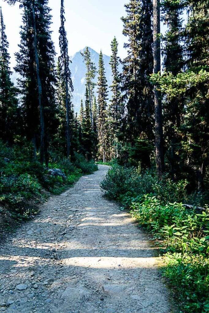 Seeing Storm Mountain through Trees on Boom Lake hiking trail
