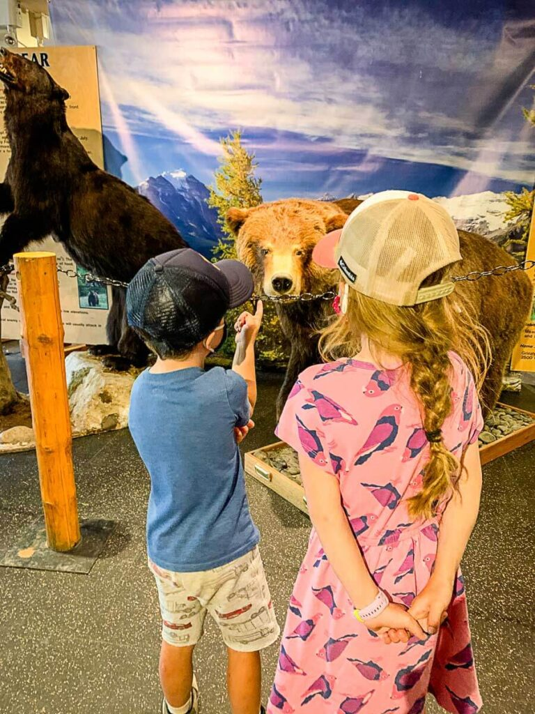 Wildlife Interpretive Centre - Lake Louise summer sightseeing gondola