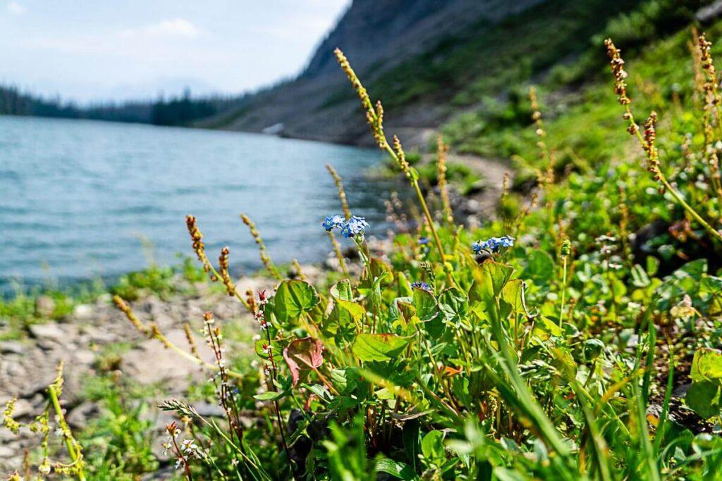 hiking to Rawson Lake Kananaskis