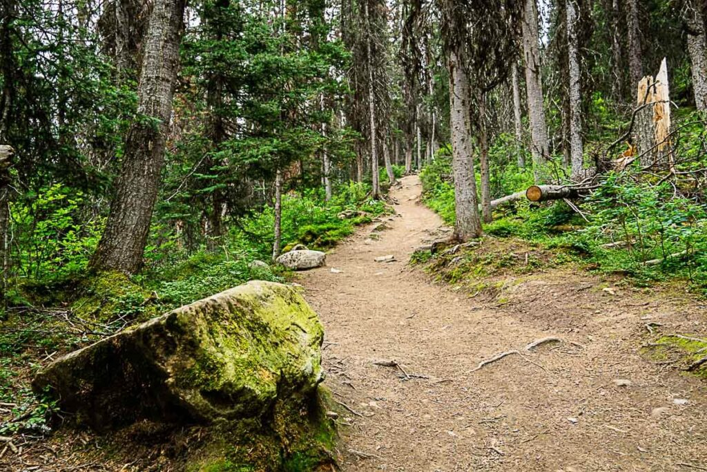 Rawson Lake hike in the forest