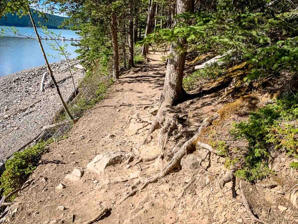 Rooty sections on Minnewanka Lake Hiking Trail