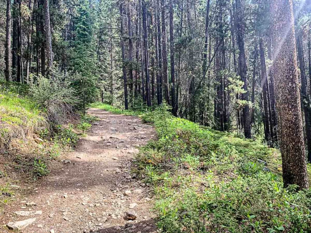 wide forested section of Castle Mountain Looking hiking trail in Banff