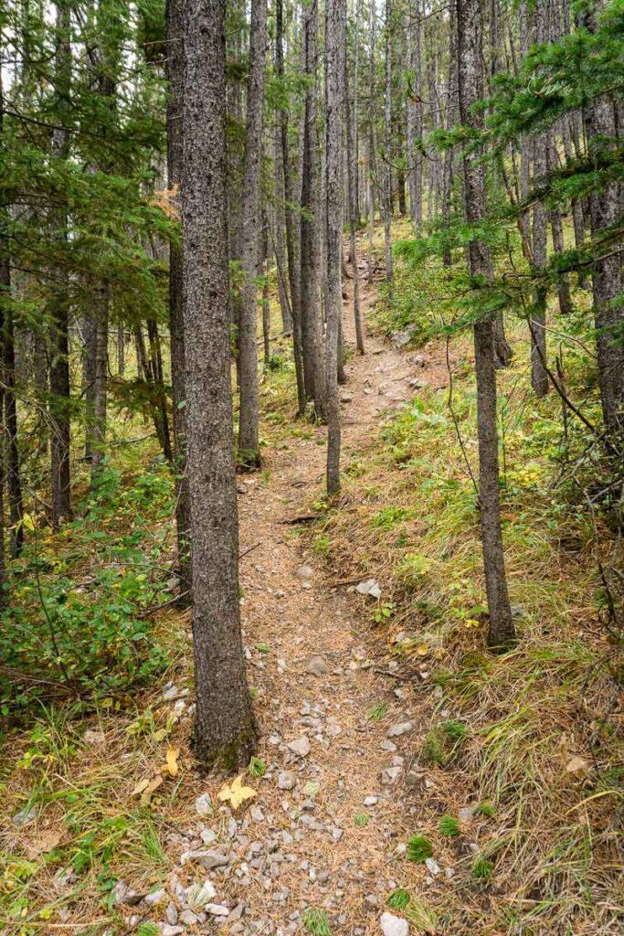 Start of Wasootch Ridge hike