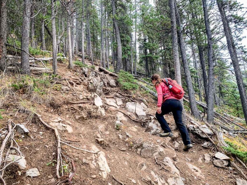 Steep section Wasootch Ridge hiking trail in Kananaskis