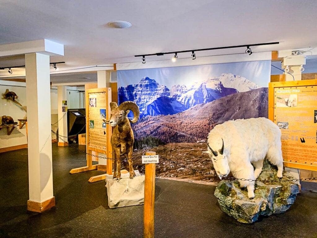 Wildlife Interpretive Centre - top of Gondola at Lake Louise