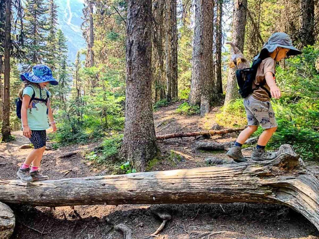 fallen logs along Lake Agnes Tea house hike