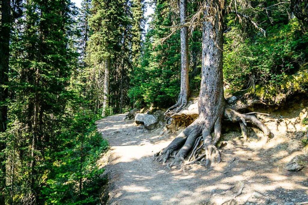 hike Lake Agnes trail to teahouse