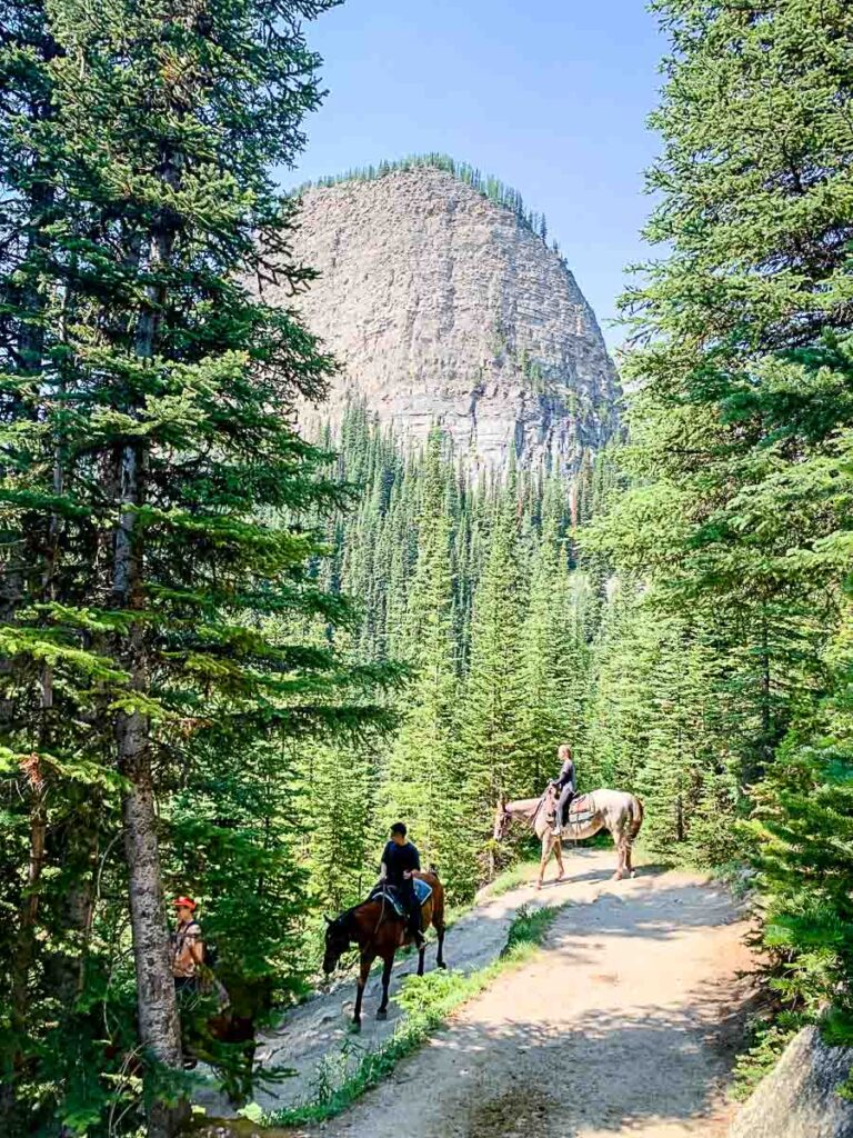 Horses on lake agnes tea house hike
