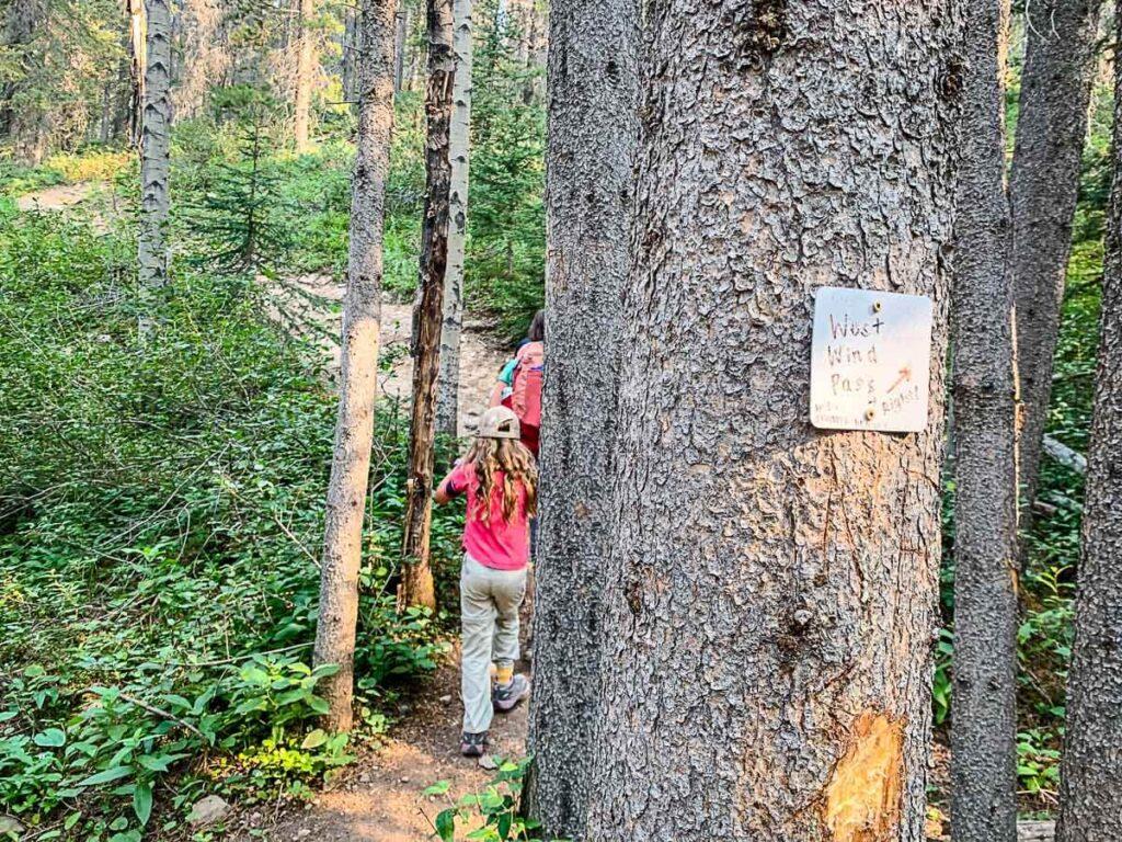 West Wind Pass hike - trailmarker on tree