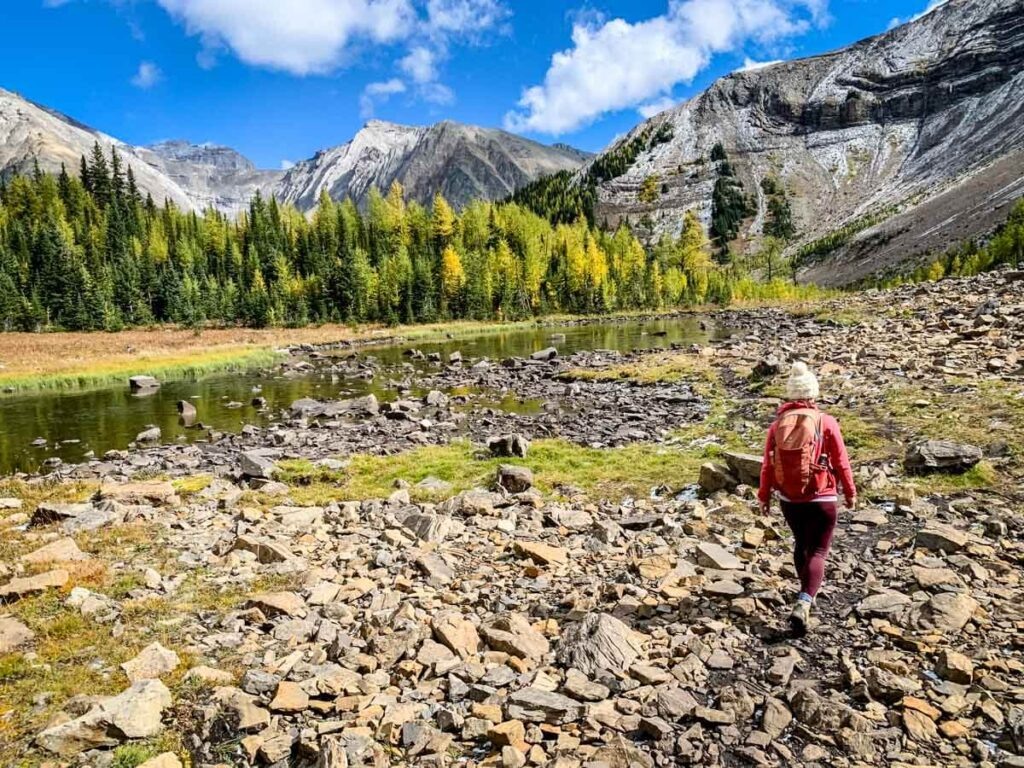 alberta best hikes for larch trees
