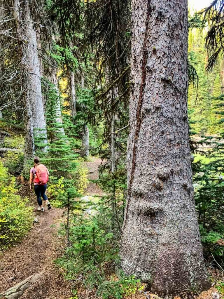 woman walking through forest near Arnica Lake in Banff National Park