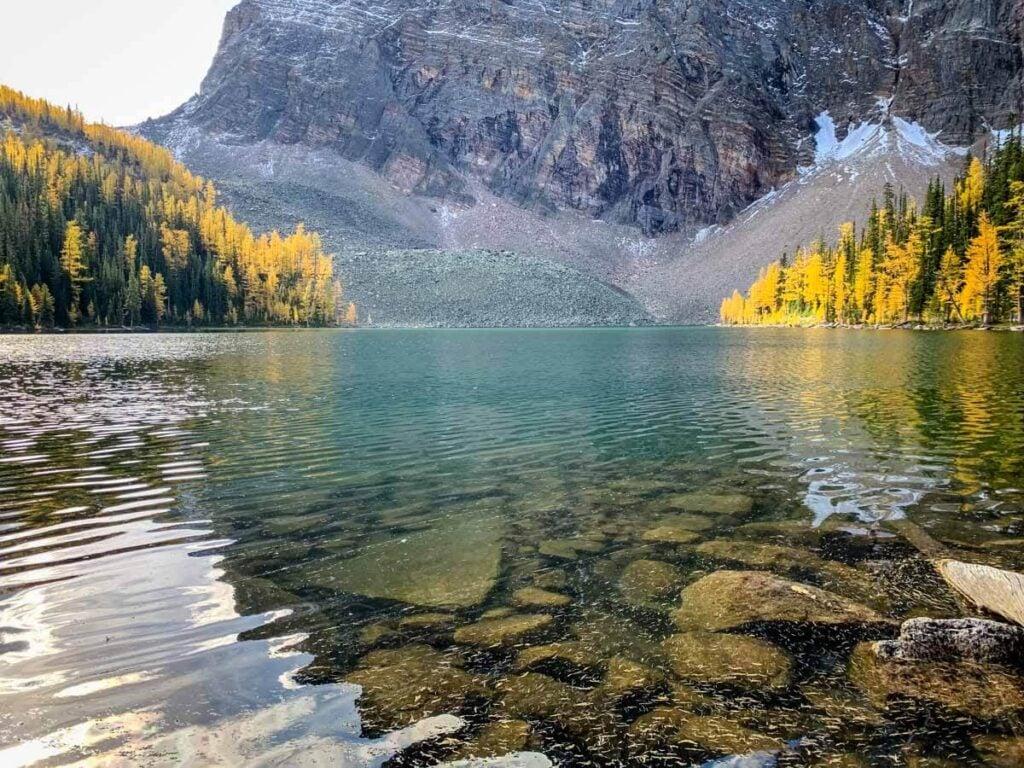 gold larches around Arnica Lake Banff
