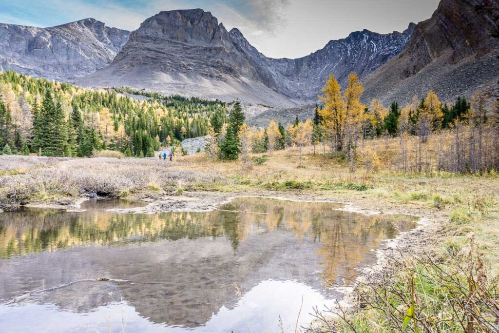 mountain streams, rocky mountains and golden larch trees make Arethusa Cirque a popular fall hike in Kananaskis