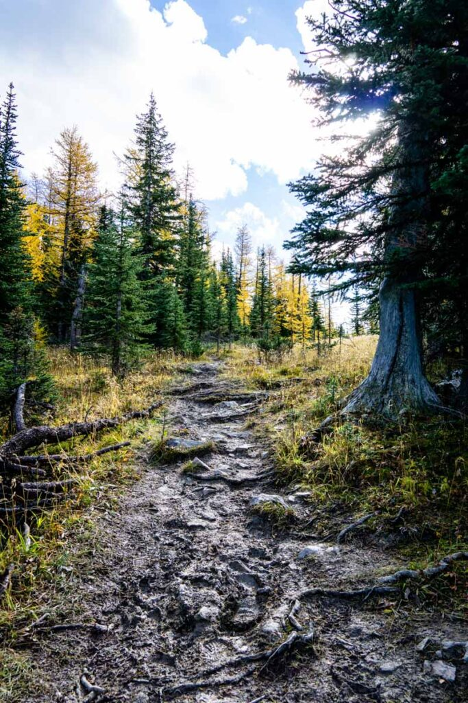 Challenging trail conditions on the Twin Lakes trail