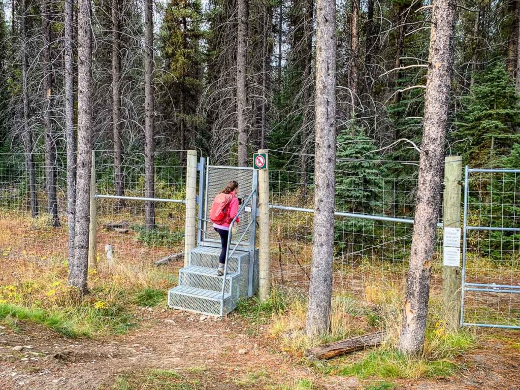 Walking through the gate to Taylor Lake hike - Banff National Park