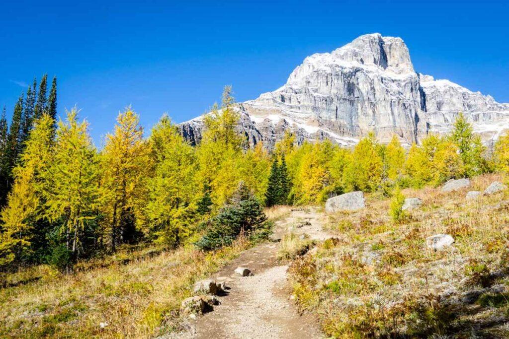 golden larches along Larch Valley Banff National Park
