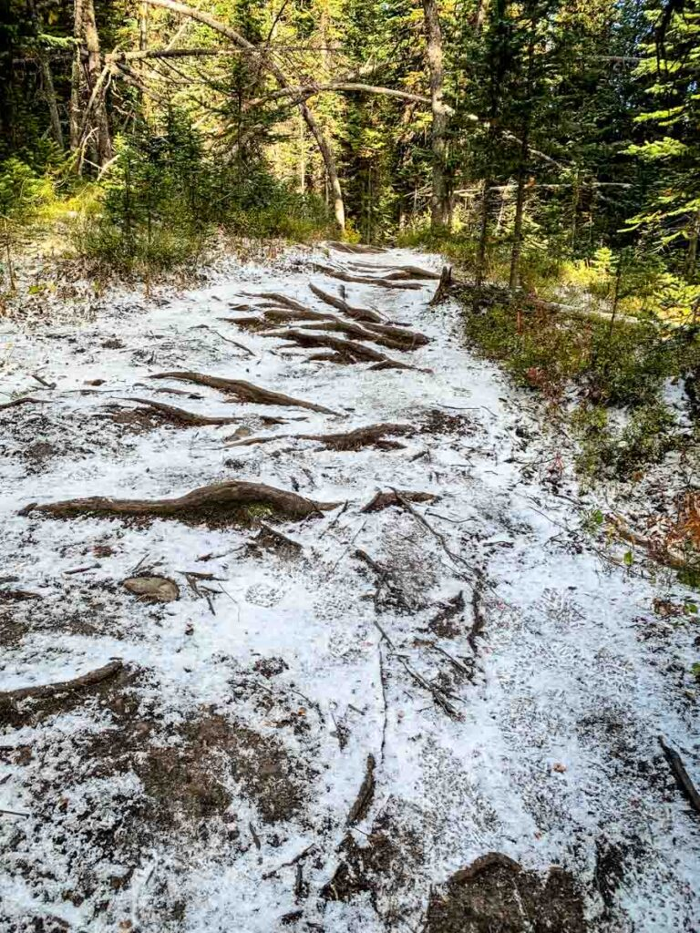 Hiking during the Kananaskis larch tree season often means icy trail conditions
