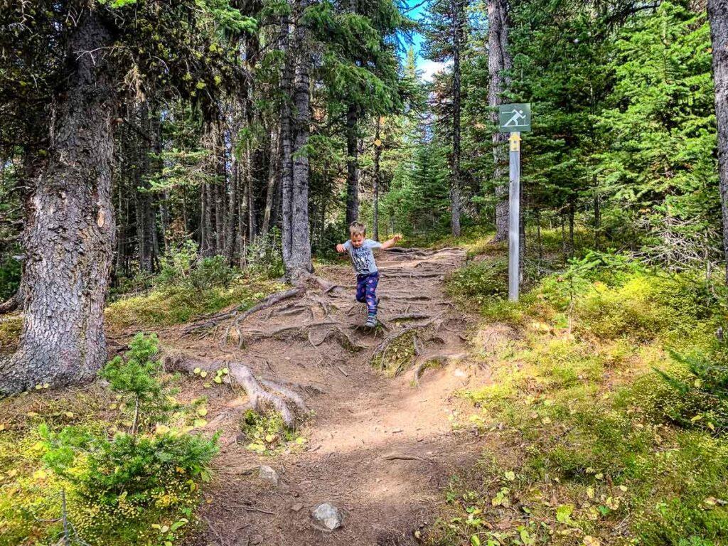 Boy jumping over roots on Kananaskis hike - Rummel Lake