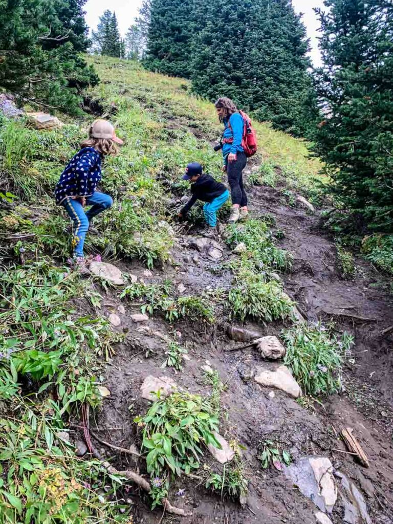 There is a short, steep downhill on the Arethusa Cirque trail which may be difficult for some hikers