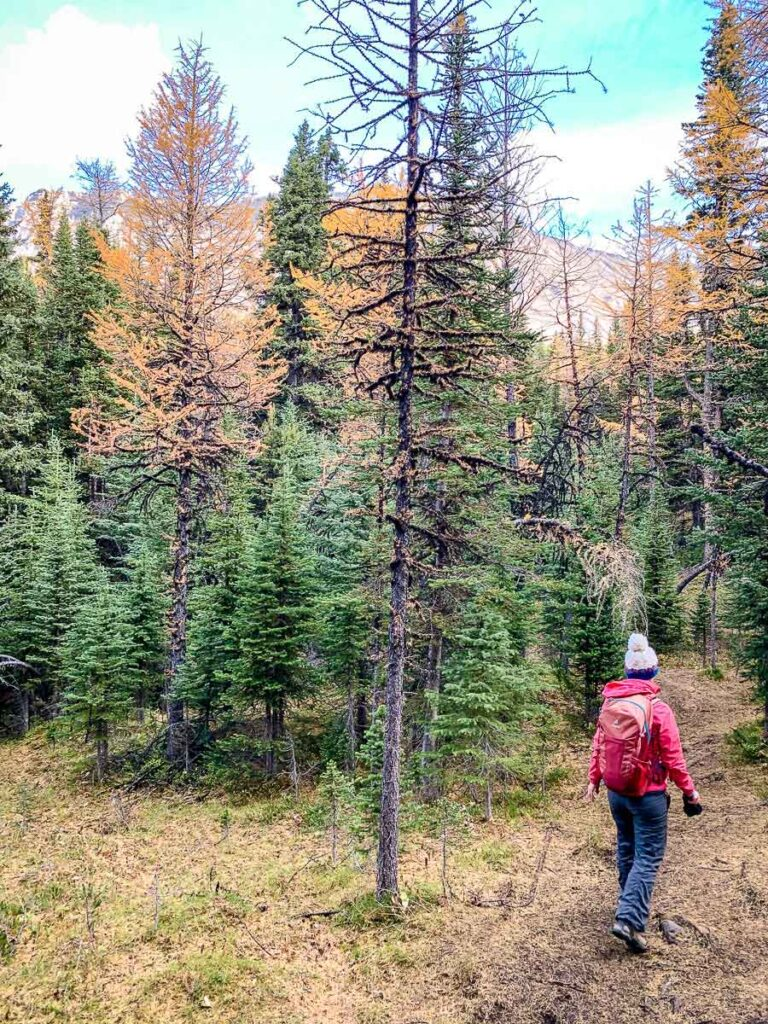 We recommend dressing in layers while hiking in Kananaskis in fall