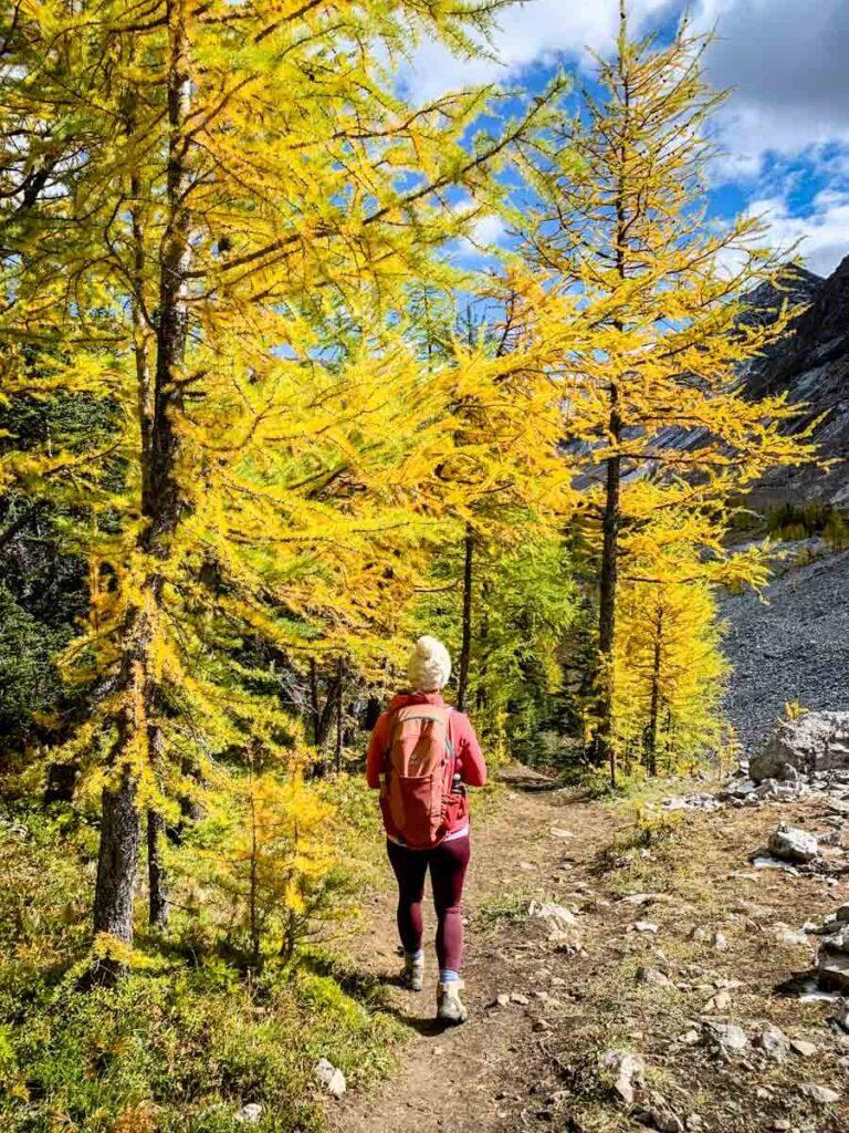 What to bring hiking during the Kananaskis larch season
