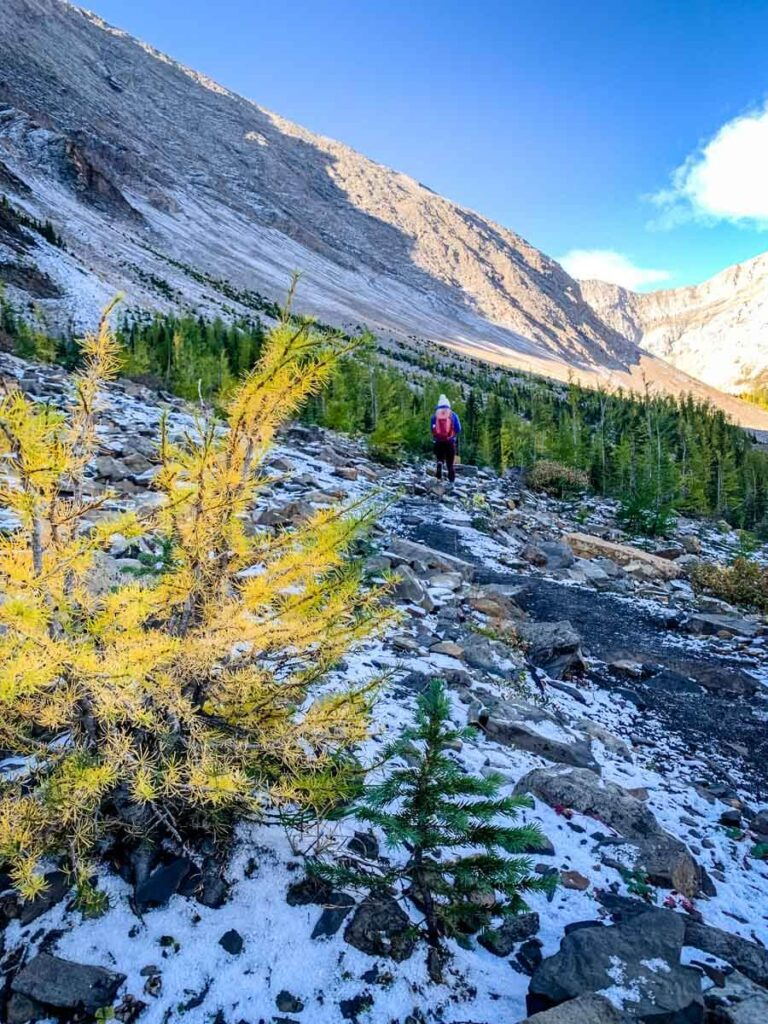 Good hiking boots are important for hiking during the Alberta larch season