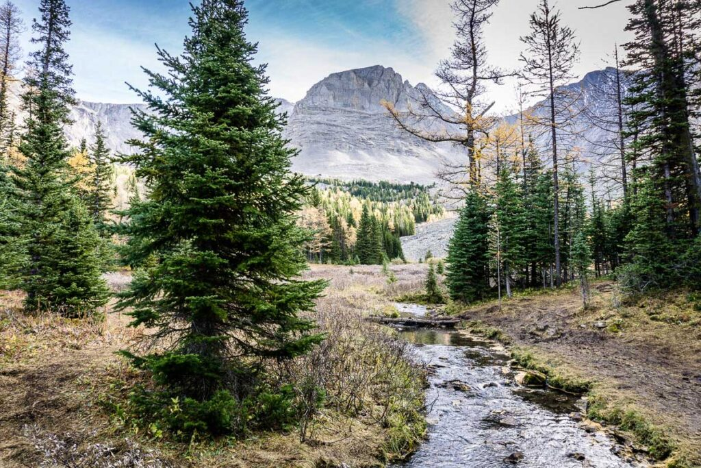 Larch hikes near Highwood Pass, Alberta
