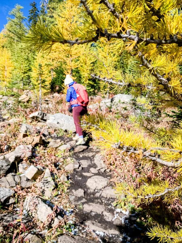 The Pocaterra Cirque trail is an excellent golden larch tree hike in Kananaskis Country