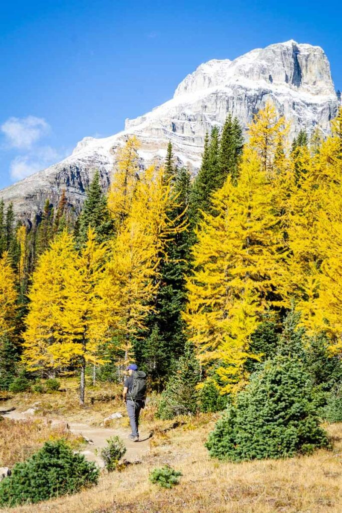 hiking Larch Valley in Banff National Park