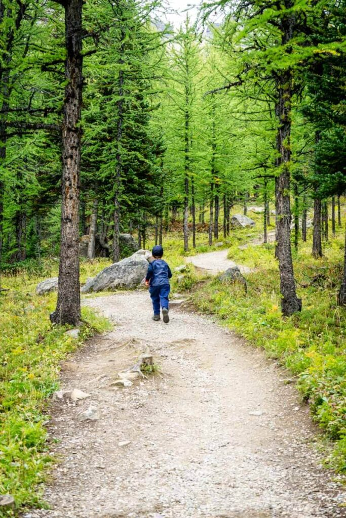 hiking with kids on best larch hikes alberta