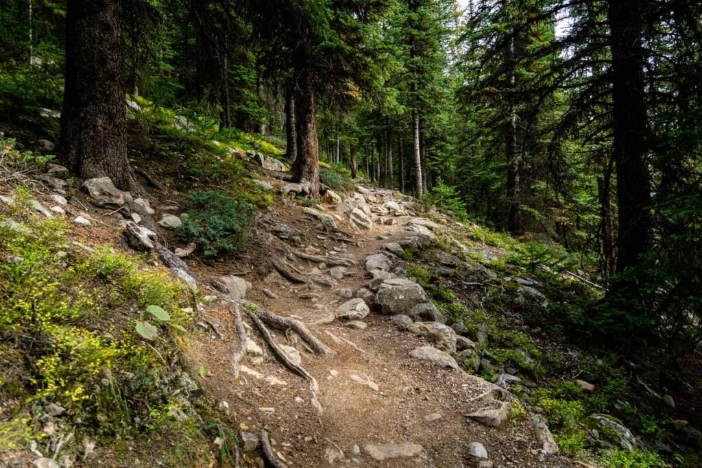 Rocky trail - banff larch valley hike