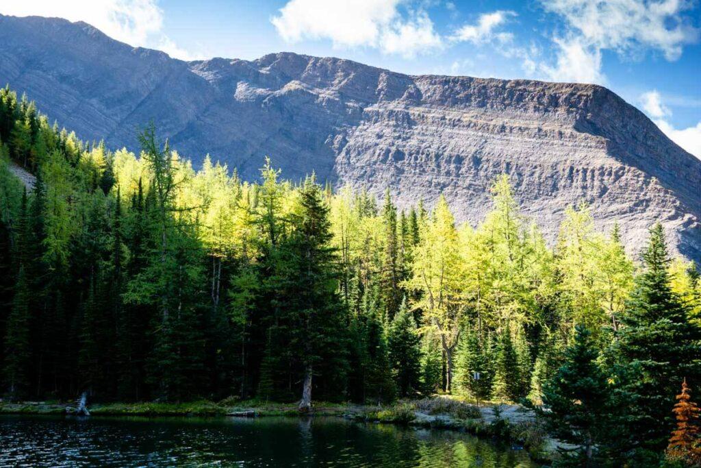 larch trees at Rummel Lake in September