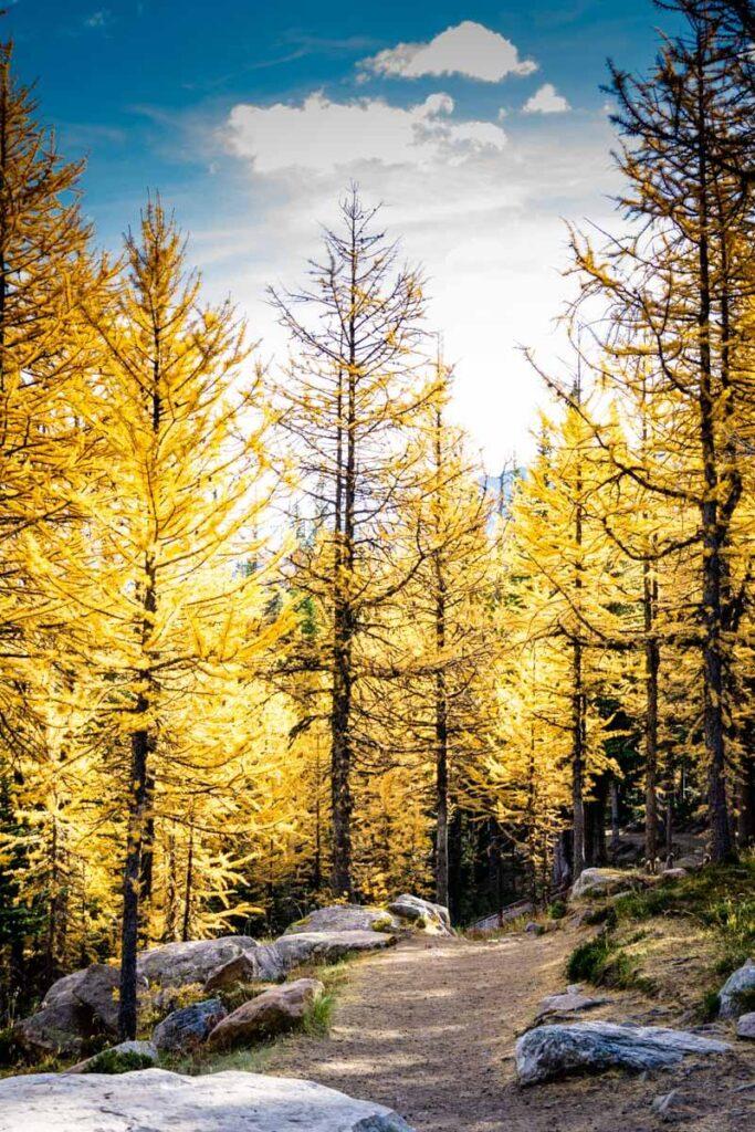 Sentinel Pass via Larch Valley Banff National Park