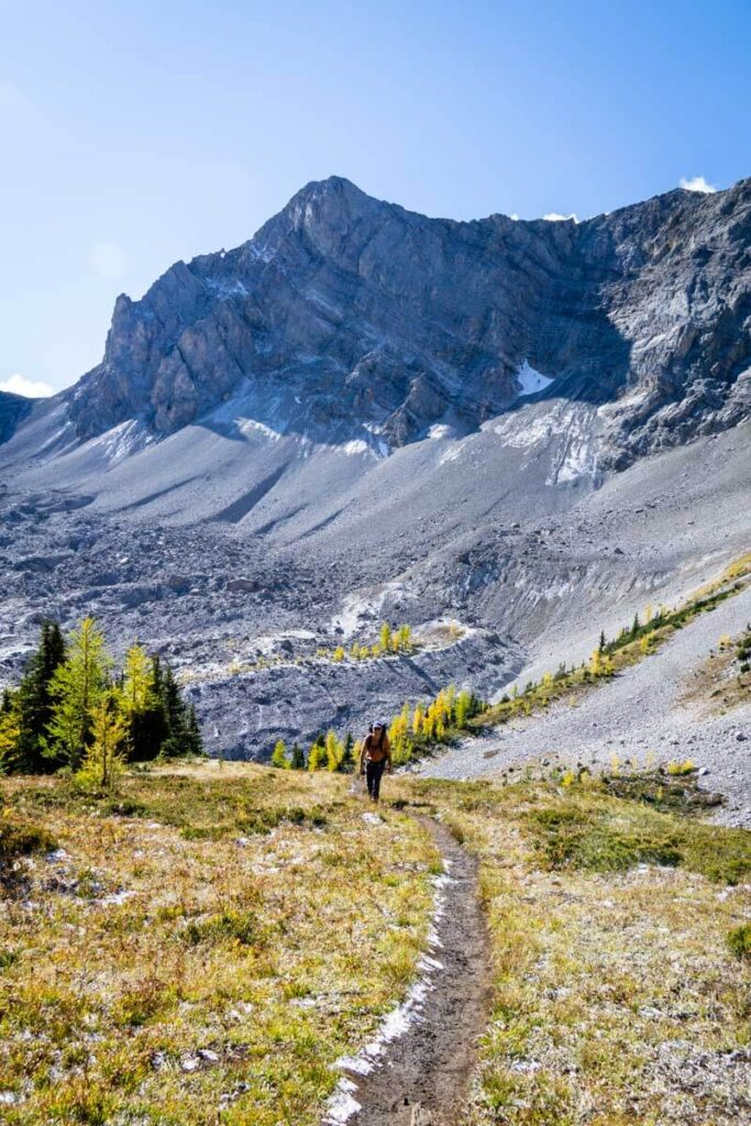 A hiker climbs to the summit of Pocaterra Ridge with Mount Trywhitt and golden larch trees in the background