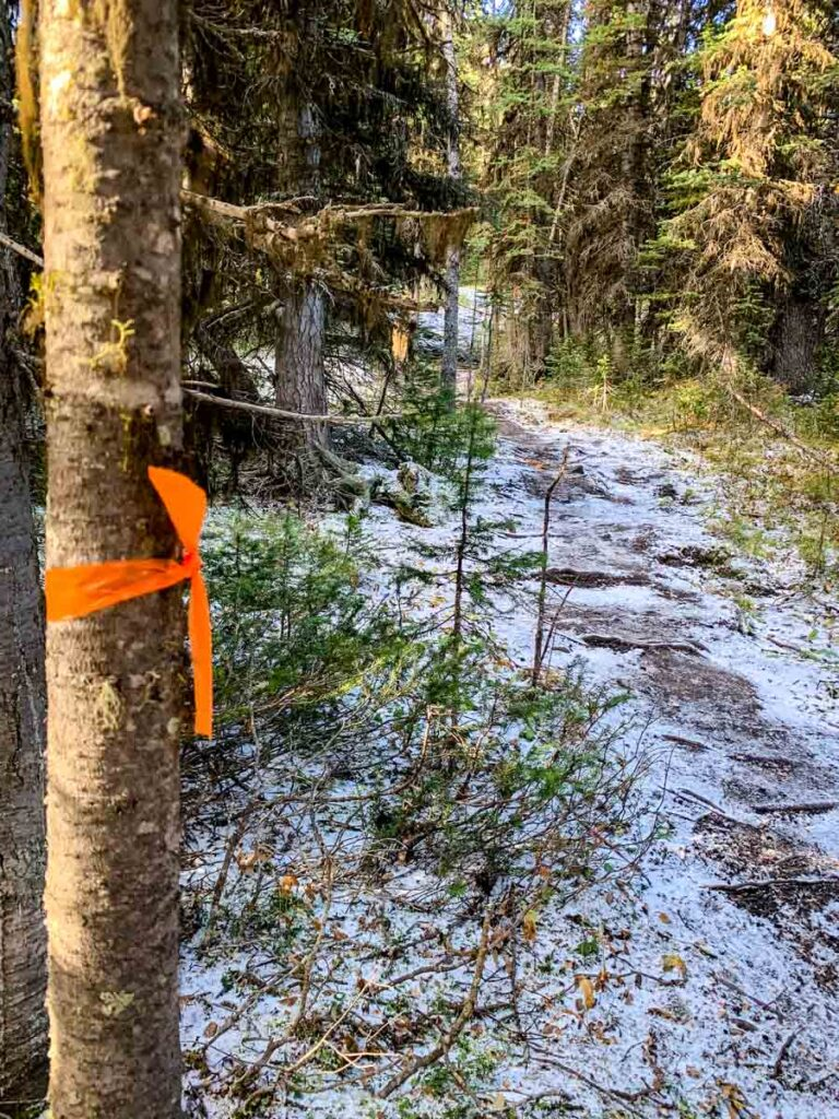 If you don't have a Pocaterra Ridge trail map, watch for the markers tied to trees