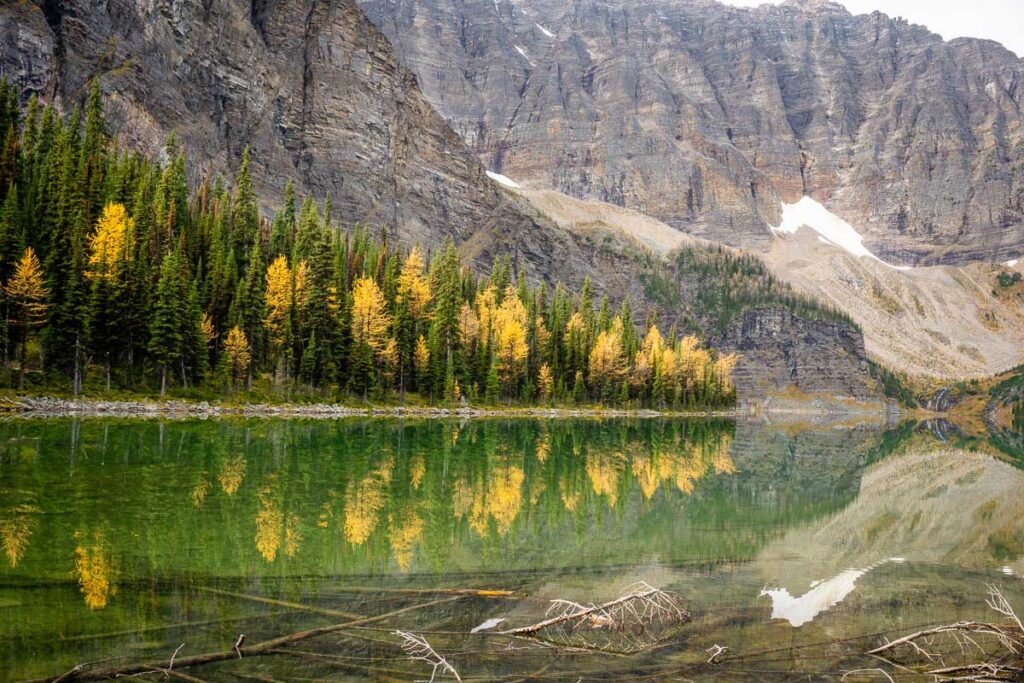 Reflections of Golden Larches on Taylor Lake
