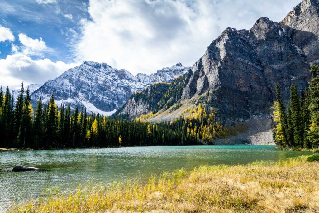 Larch trees on Storm Mountain behind Upper Twin Lake in fall