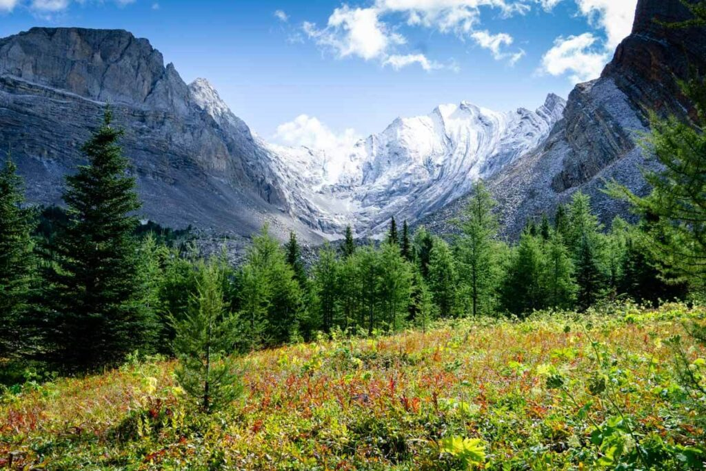The meadow at the beginning of the loop on the Arethusa Cirque trail is an incredibly scenic spot in Kananaskis, Caanda