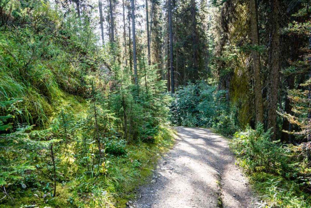 Taylor Lake hiking trail in Banff National Park