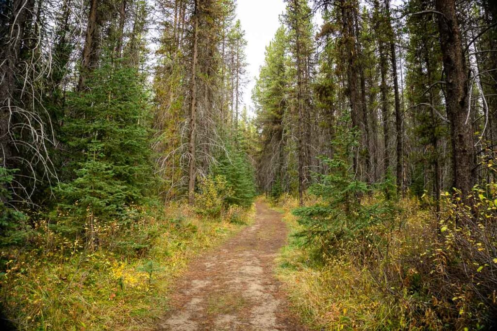 Taylor Lake hiking trail in Fall in Banff National Park