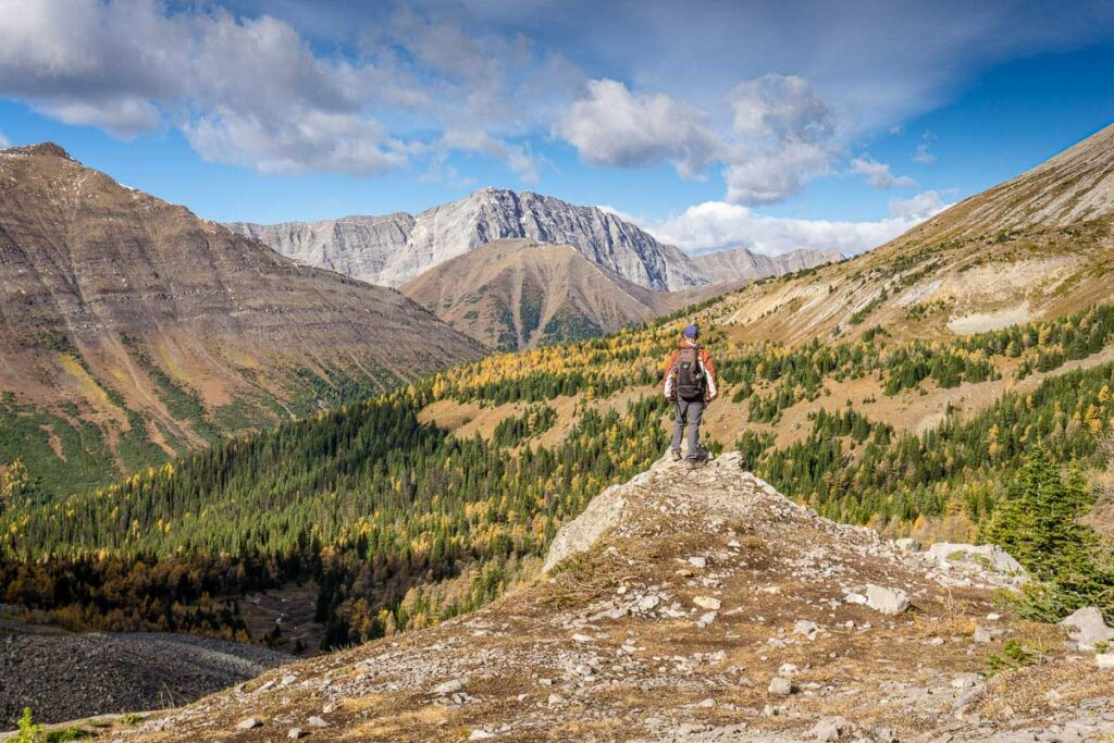 You'll enjoy an excellent view of Pocaterra Ridge from Arethusa Cirque - two of the best larch hikes in Alberta
