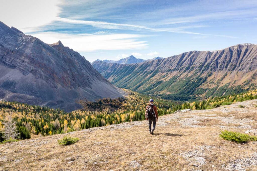 It's easy to see why Arethusa Cirque is one of the best larch tree hikes in Alberta