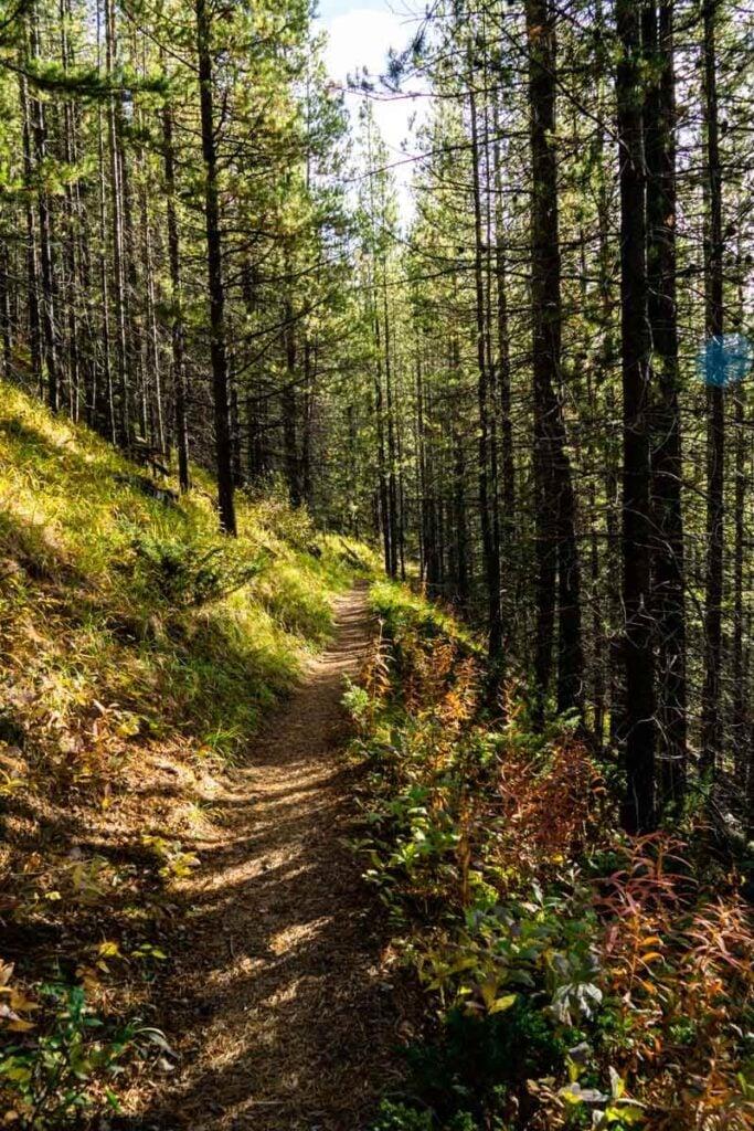 hiking trail to Vista Lake Banff