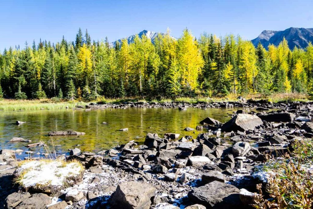 best larch hikes alberta