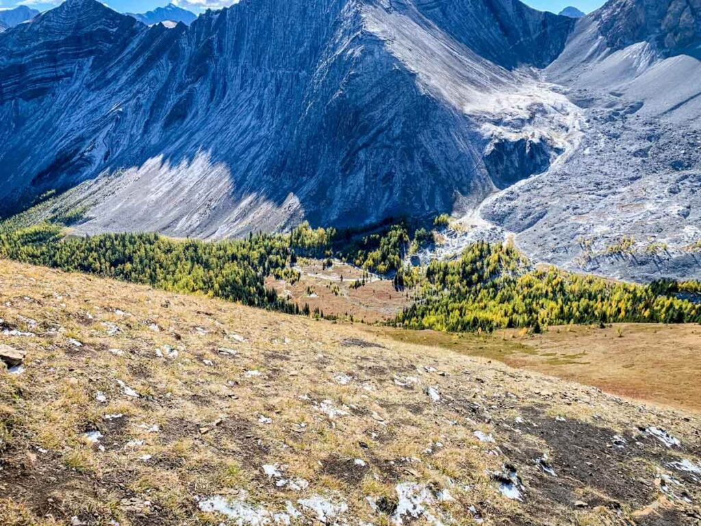 the larch tree forest in front of Pocaterra Cirque is one of the largest in Alberta